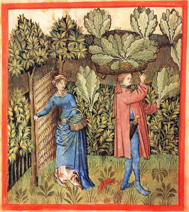 Harvesting-cabbages-in-the-15th-century.jpg